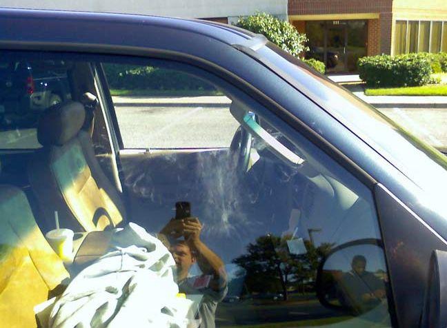 Птица не заметила машину (4 фото)