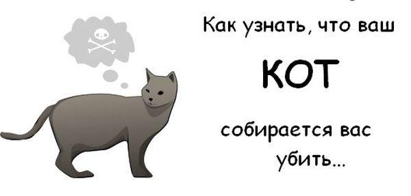 Как узнать, что ваш кот собирается вас убить (10 картинок)
