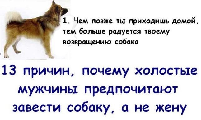 13 причин, почему холостые мужчины предпочитают завести собаку, а не жену (14 картинок)