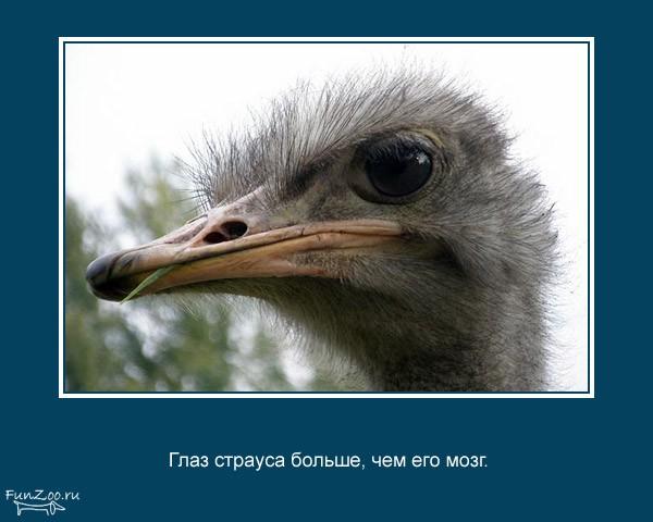 Животные. То, чего вы не знали (25 фото)