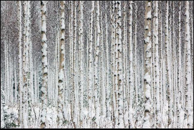 Романтичная зима (15 фото)