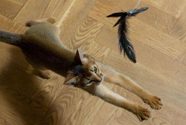 Развлечение котов (12 фото)