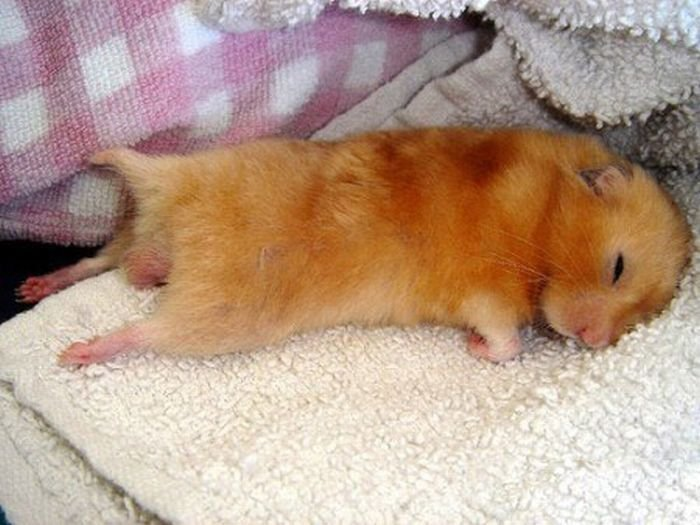 Фотографии спящих животных (21 фото)