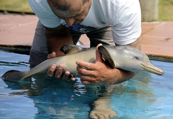 Дельфин 10ти дней от роду (7 фото)