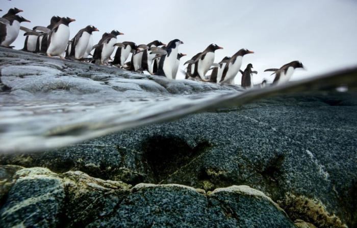 Миграции животных (29 фото)