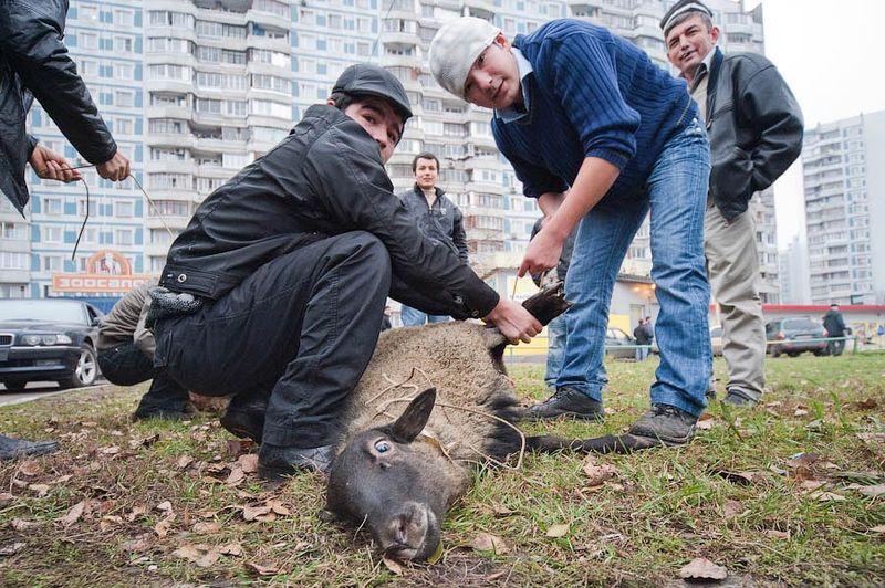 Курбан-Байрам в Москве (37 фото)