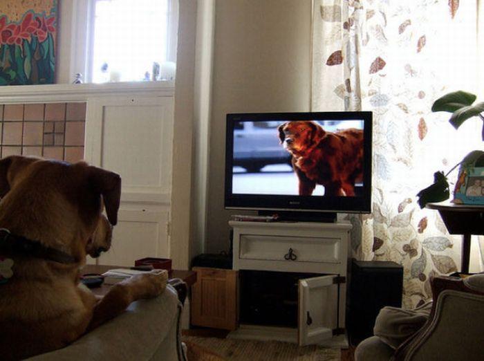 нравится ли собакам смотреть телевизор бытовые электроприборы помещениях