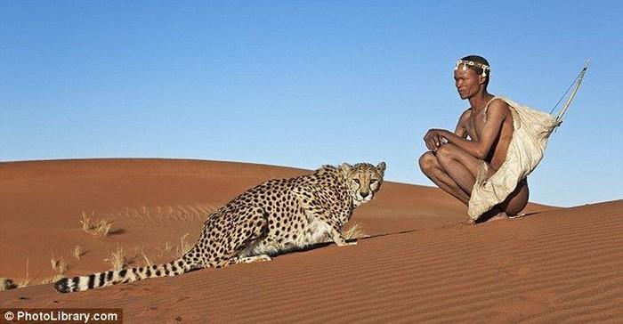 Лучший друг гепард (5 фото)