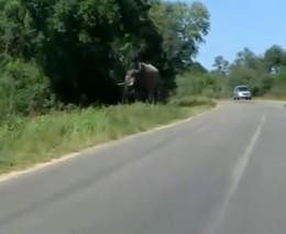 Слон хотел напасть на машину