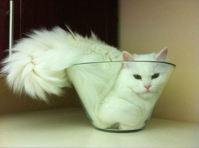Кошка - вещество, которое может принимать форму любой емкости (3 фото)