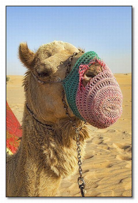 Конфеты из Дубая