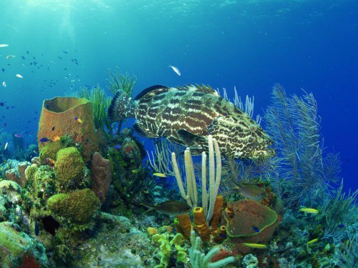 Вся красота подводного мира (100 фото)