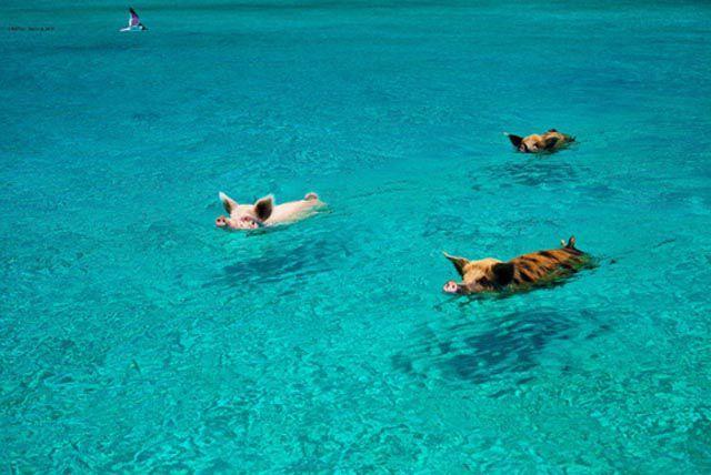 Незабываемый отдых на Багамских островах (29 фото)