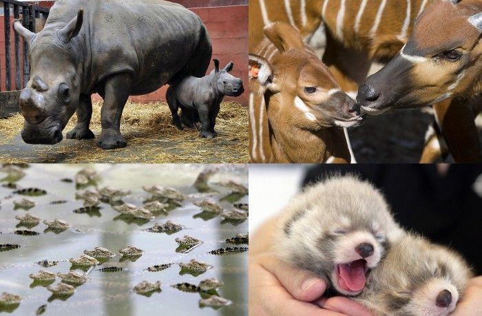 Фотографии детенышей животных со всего мира (25 фото)