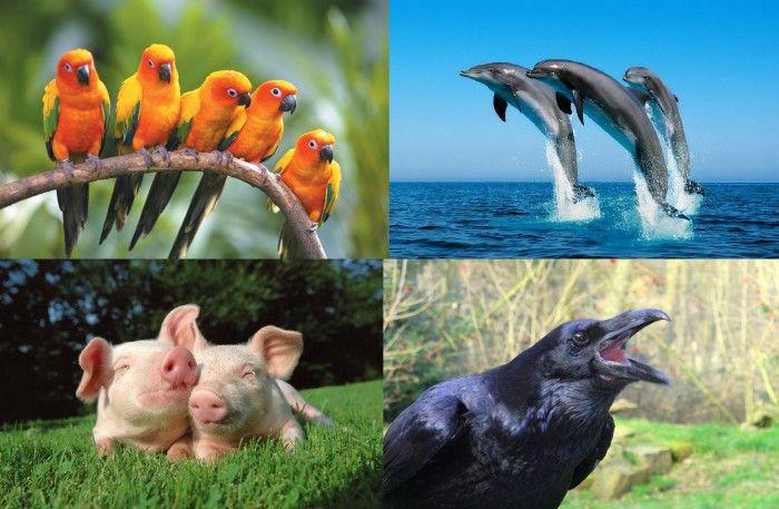 Самые умные существа на планете (9 фото)