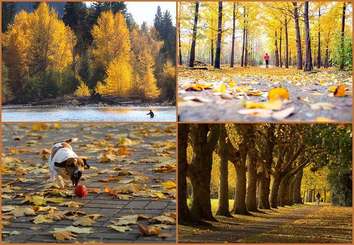 Осенние краски (27 фото)