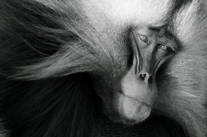 Фотоработы с конкурса National Geographic 2011 (47 фотографий), photo:7