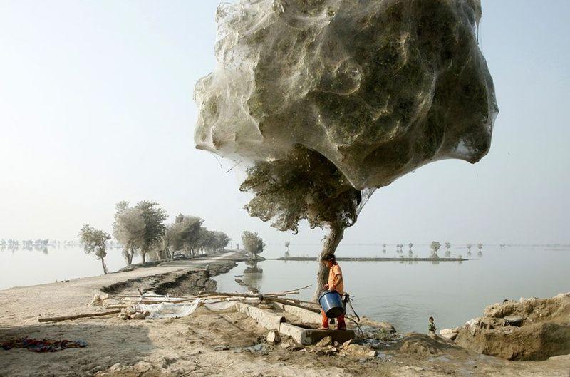 Фотоработы с конкурса National Geographic 2011 (47 фотографий), photo:8
