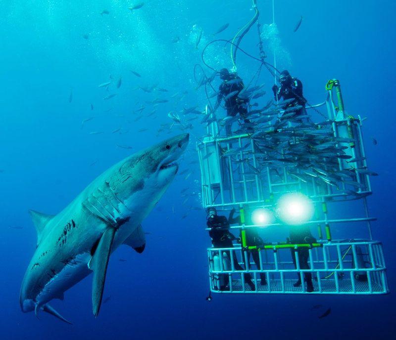 Фотоработы с конкурса National Geographic 2011 (47 фотографий), photo:12