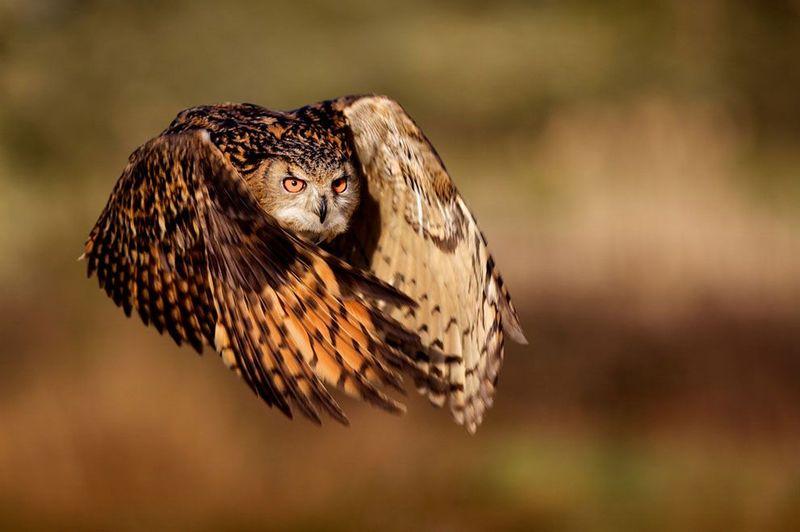 Фотоработы с конкурса National Geographic 2011 (47 фотографий), photo:26