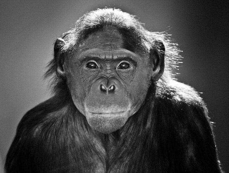 Фотоработы с конкурса National Geographic 2011 (47 фотографий), photo:32
