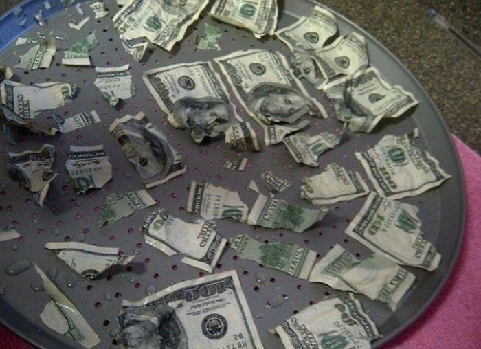Собака съела заначку хозяев – 1000 долларов наличными (4 фото)