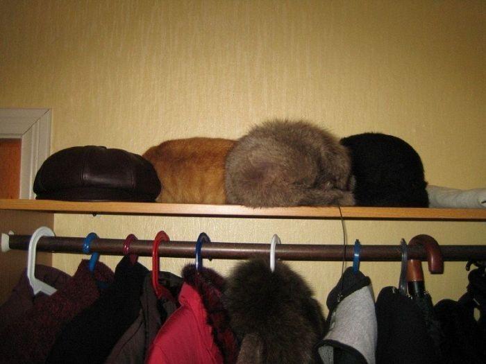 Найдите кота (47 фото)