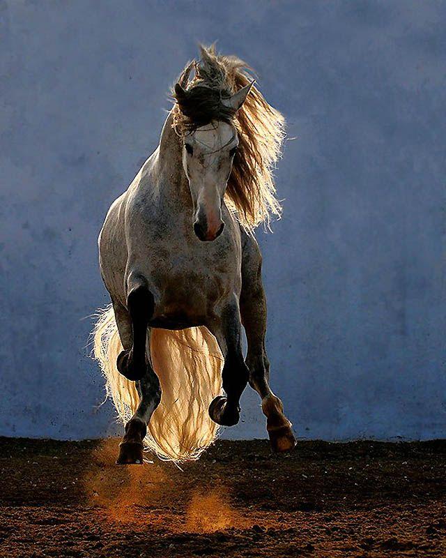 Смешные картинки лошадей двигающихся