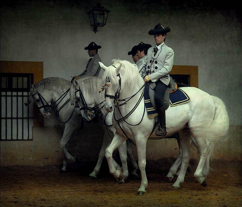1834 Сказочная красота   арабские и андалузские лошади