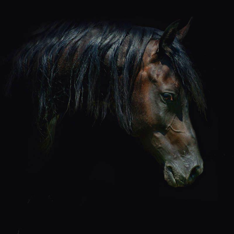 2032 Сказочная красота   арабские и андалузские лошади