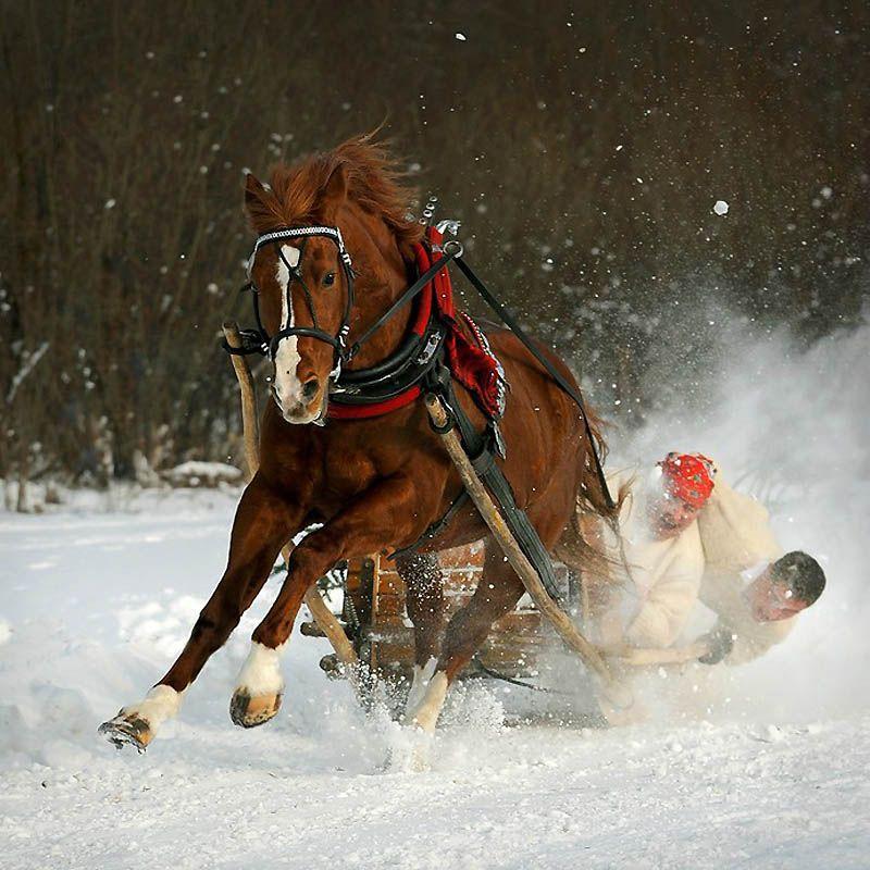 2152 Сказочная красота   арабские и андалузские лошади