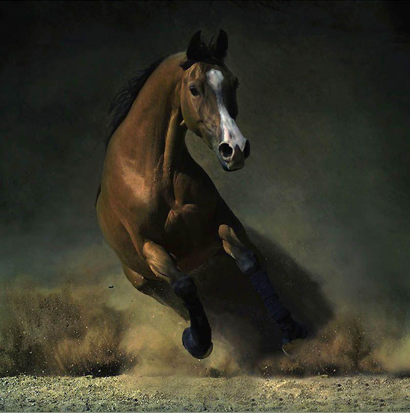 2153 Сказочная красота   арабские и андалузские лошади