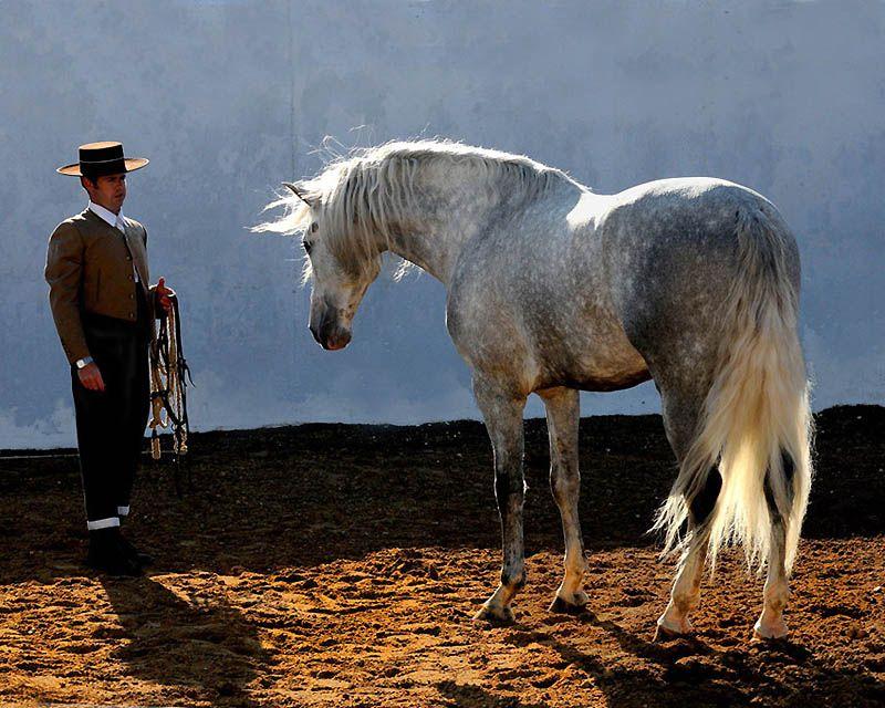 3320 Сказочная красота   арабские и андалузские лошади