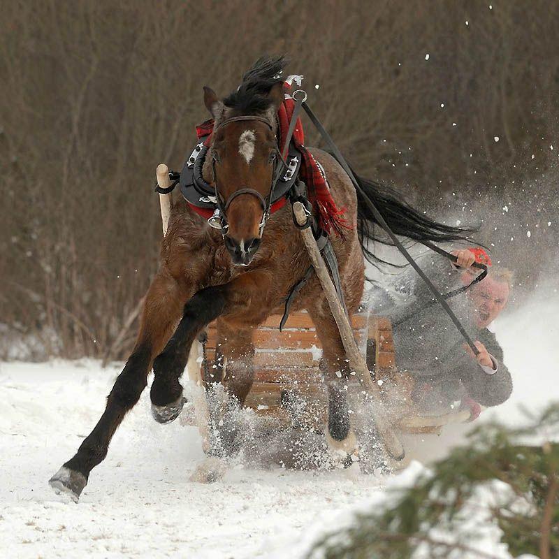 675 Сказочная красота   арабские и андалузские лошади