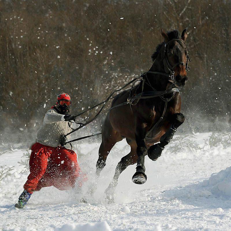 865 Сказочная красота   арабские и андалузские лошади