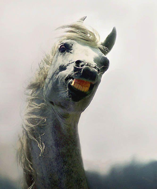 957 Сказочная красота   арабские и андалузские лошади