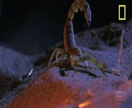 Его величество скорпион