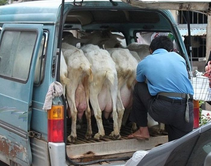 Доставка молока. Китайский вариант. (3 фото)