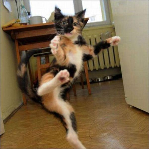 Коты - хулиганы (67 фото)