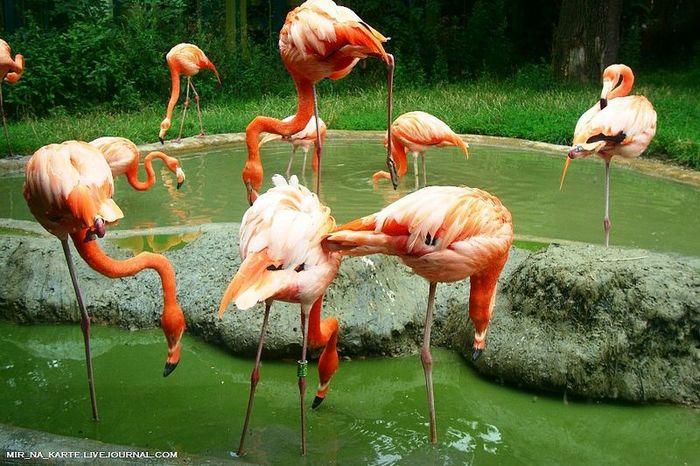 Венский зоопарк. Tiergarten Schonbrunn (23 фото)