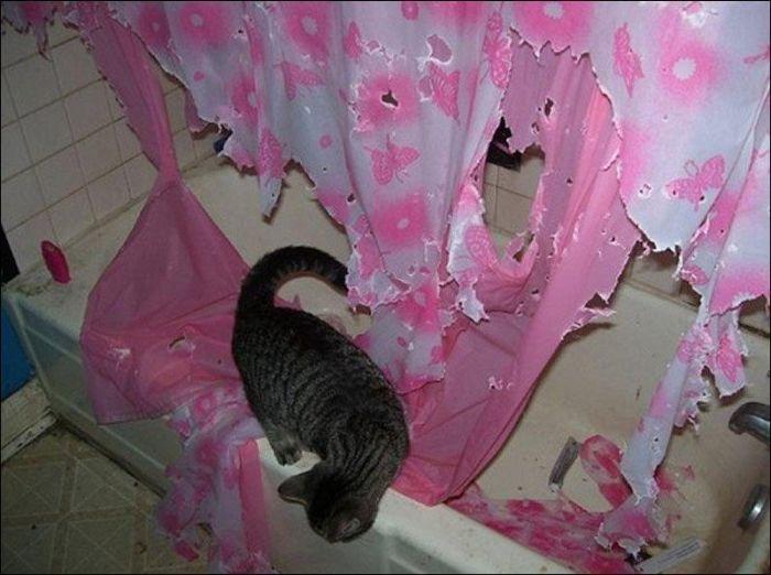 Что будет, если оставить кошку в ванной на 2 минуты? (2 фото)