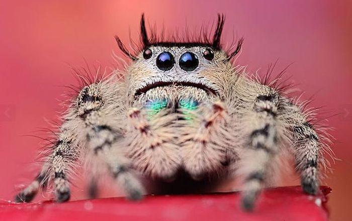 Удивительные жуки и амфибии (27 фото)