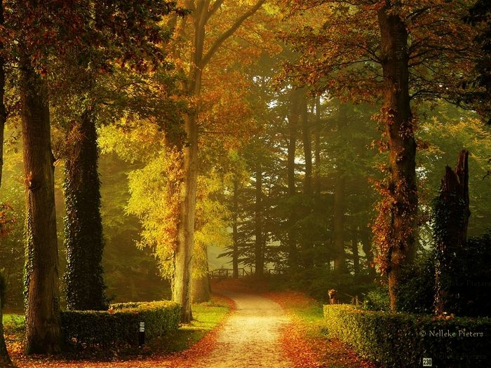 Осенние пейзажи Неллеке Питерс (19 фото)