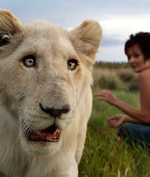 Белый лев в домашних условиях (8 фото)