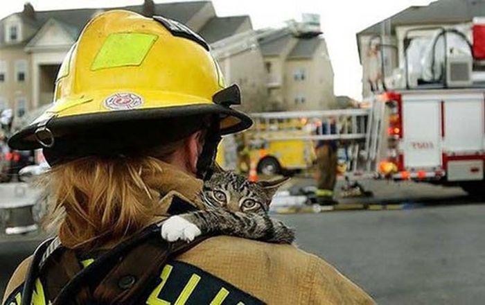 Подборка спасенных котов (12 фото)