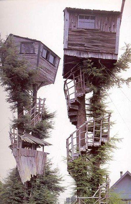 Интересные идеи по размещению домов на деревьях (39 фото)