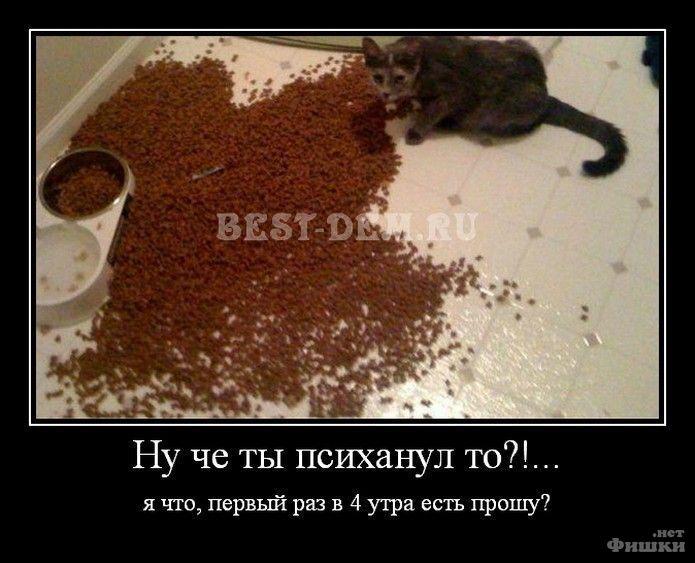 https://ru.fishki.net/picsw/112012/23/post/psih/psih-0031.jpg
