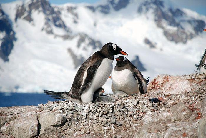 Один день в Антарктиде (30 фото)