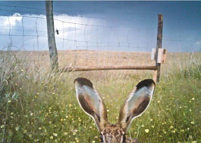 Слежка за животными (21 фото)
