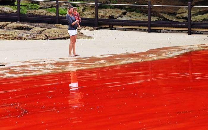 Кровавый океан в Австралии(10 фото)